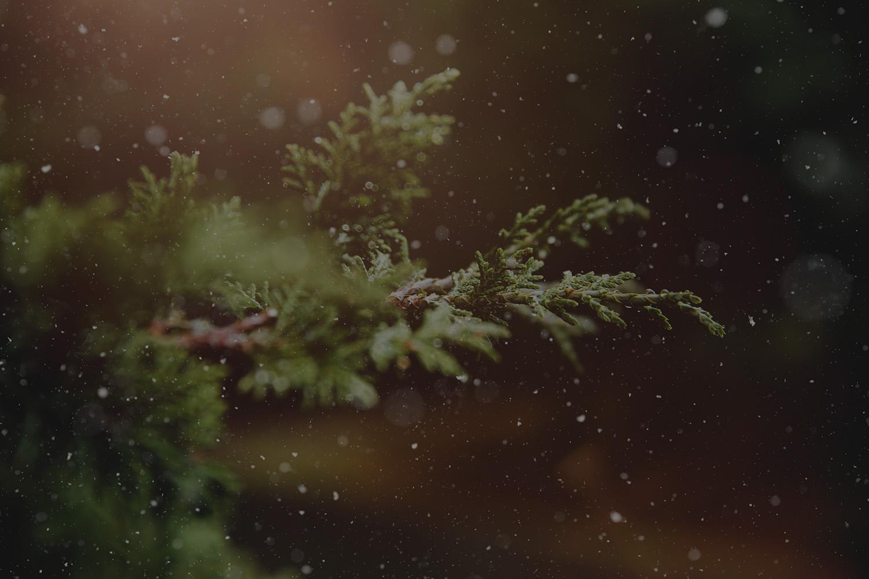 advent-blur-branch-237180